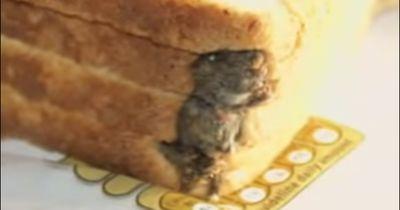 Ekel-Horror! Was sich im Essen alles unglaubliches findet!