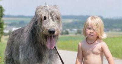 Als sein Hund eingeschläfert wird, sagt dieser Junge etwas wundervolles