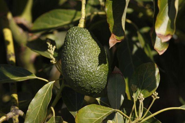 Avocado: Wegen diesen 6 Gründen solltest du diese Frucht so oft wie möglich essen: