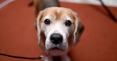 """Achtung: DIESE 6 """"harmlosen"""" Snacks bringen dein Haustier in Lebensgefahr!"""