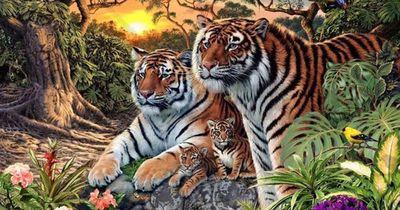 Sieh genau hin - wie viele Tiger findest du?