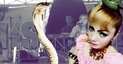 Schock! Sängerin wird beim Auftritt von einer Schlange gebissen und stirbt!