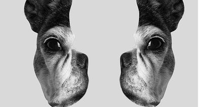 Optische Illusion: Foto löst Diskussionsdebatte im Netz aus