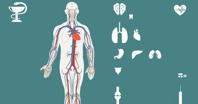 Überliste deinen Körper