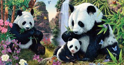 Findest du jeden Panda?