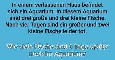 Wie viele Fische sind im Aquarium?