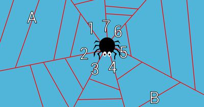 Die schlaue Spinne